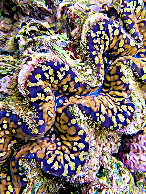 Psychedelic Clam thumbnail