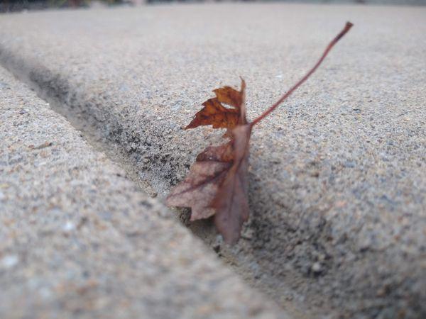 A Leaf on the Sidewalk thumbnail