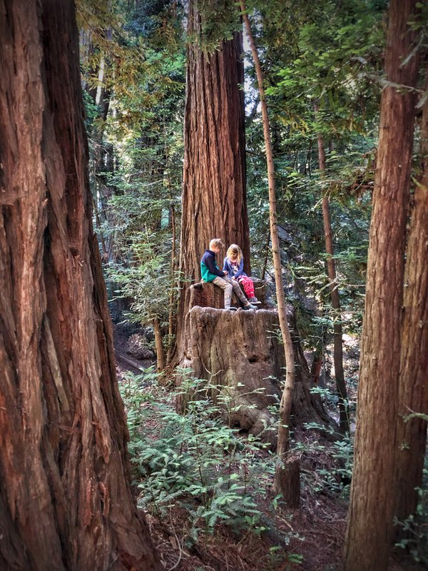 Babes in the Woods thumbnail