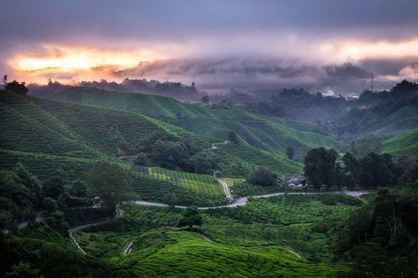 Sunrise at a tea plantation in Cameron Highlands, Malaysia.
