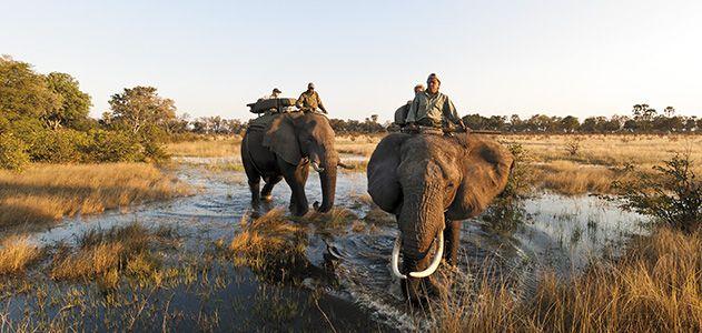Abu Camp elephants