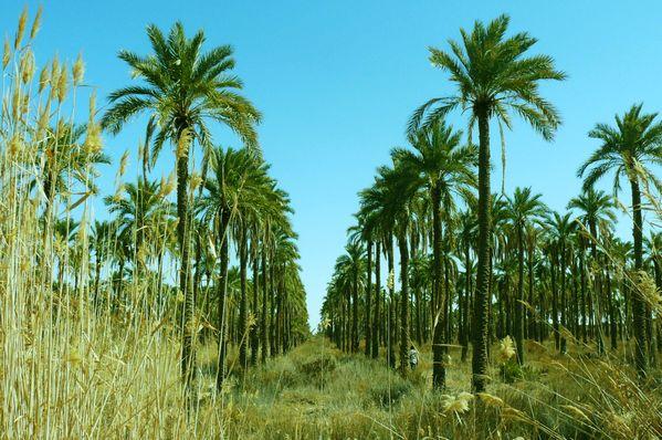 The Palm Grove thumbnail
