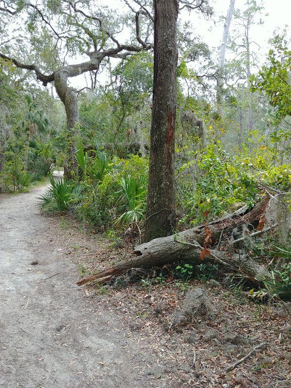 Trail at Fort Caroline thumbnail