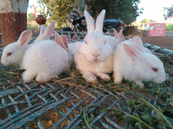 Rabbits ready for photoshoot thumbnail