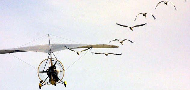 crane631.jpg
