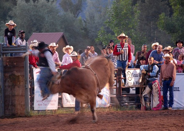 Cowboy on a Ride thumbnail