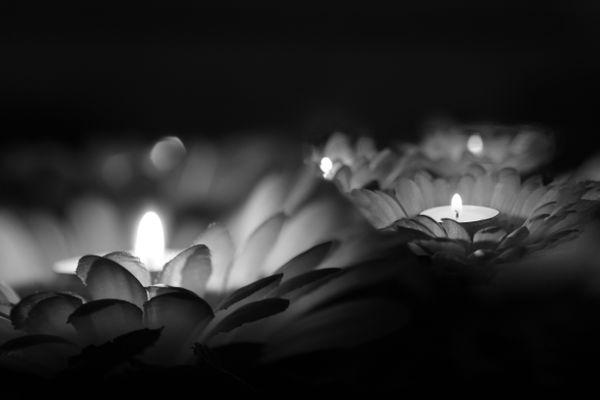 Candlelight Serenity thumbnail