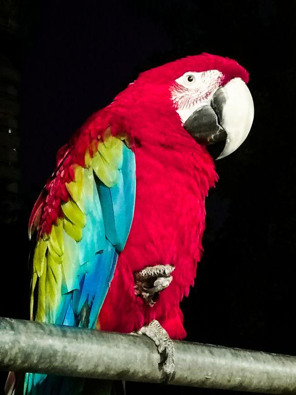 A beautiful parrot thumbnail