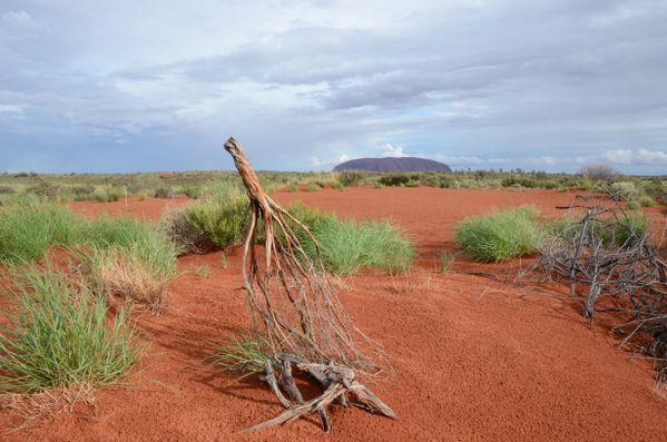 Deserted Landscape at Uluru thumbnail