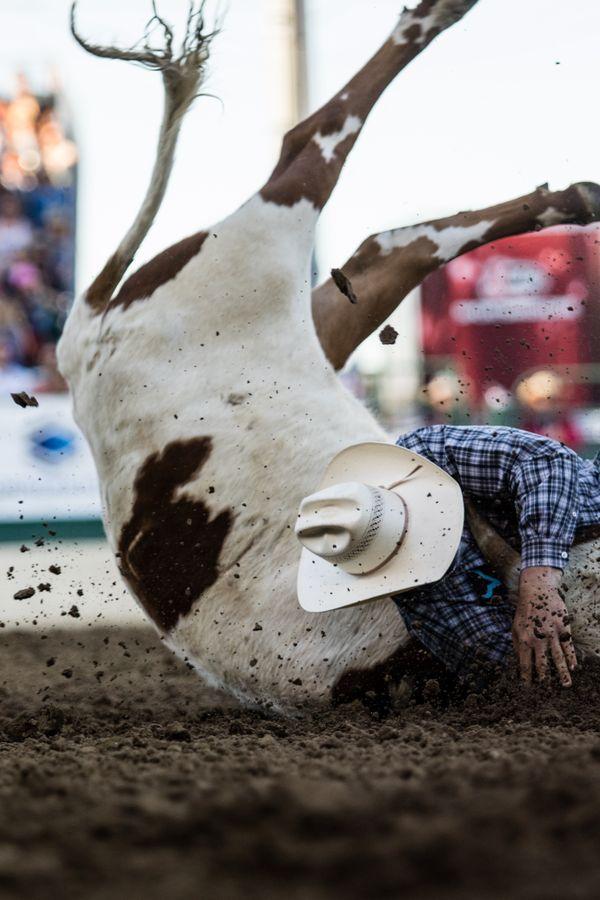 Cowboy tackles cow thumbnail