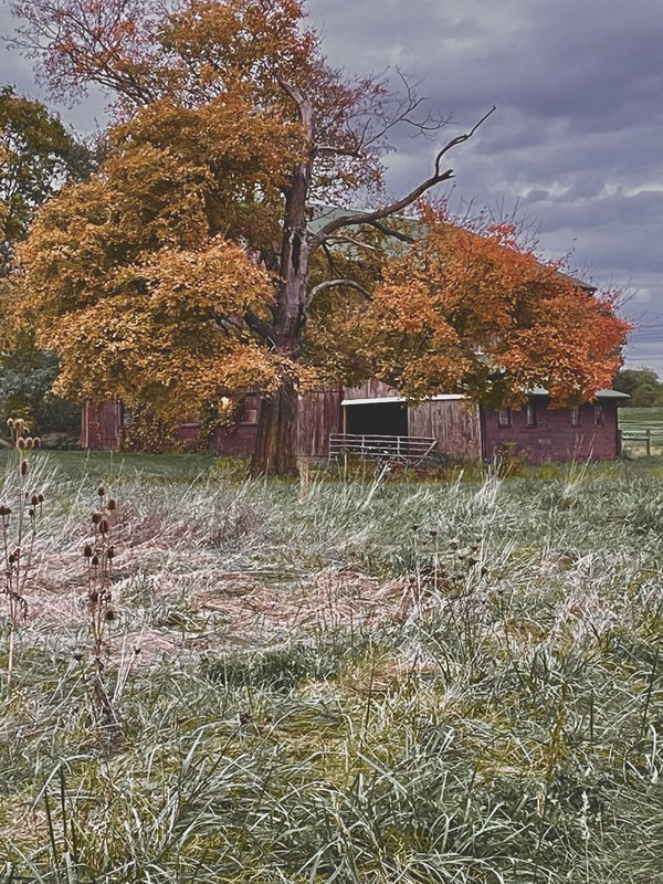 Classic Autumn Living thumbnail