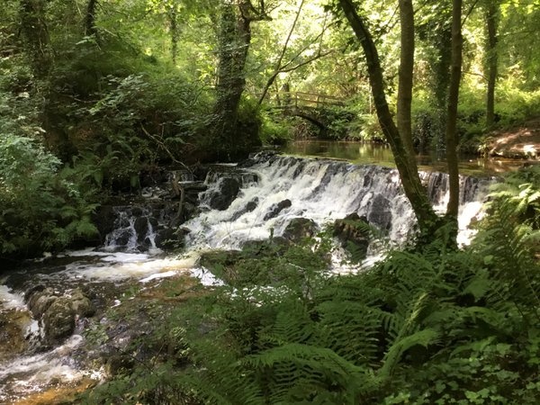Dún a Rí Forest waterfall, Ireland thumbnail