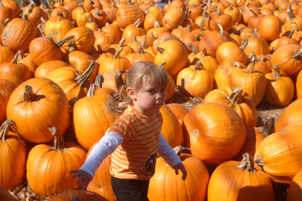 Daughter in the Sea of Pumpkins thumbnail