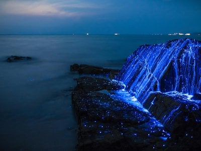 """Bioluminescent """"sea fireflies,"""" a species of ostracod crustacean, covering the rocks on the coast of Okayama, Japan."""