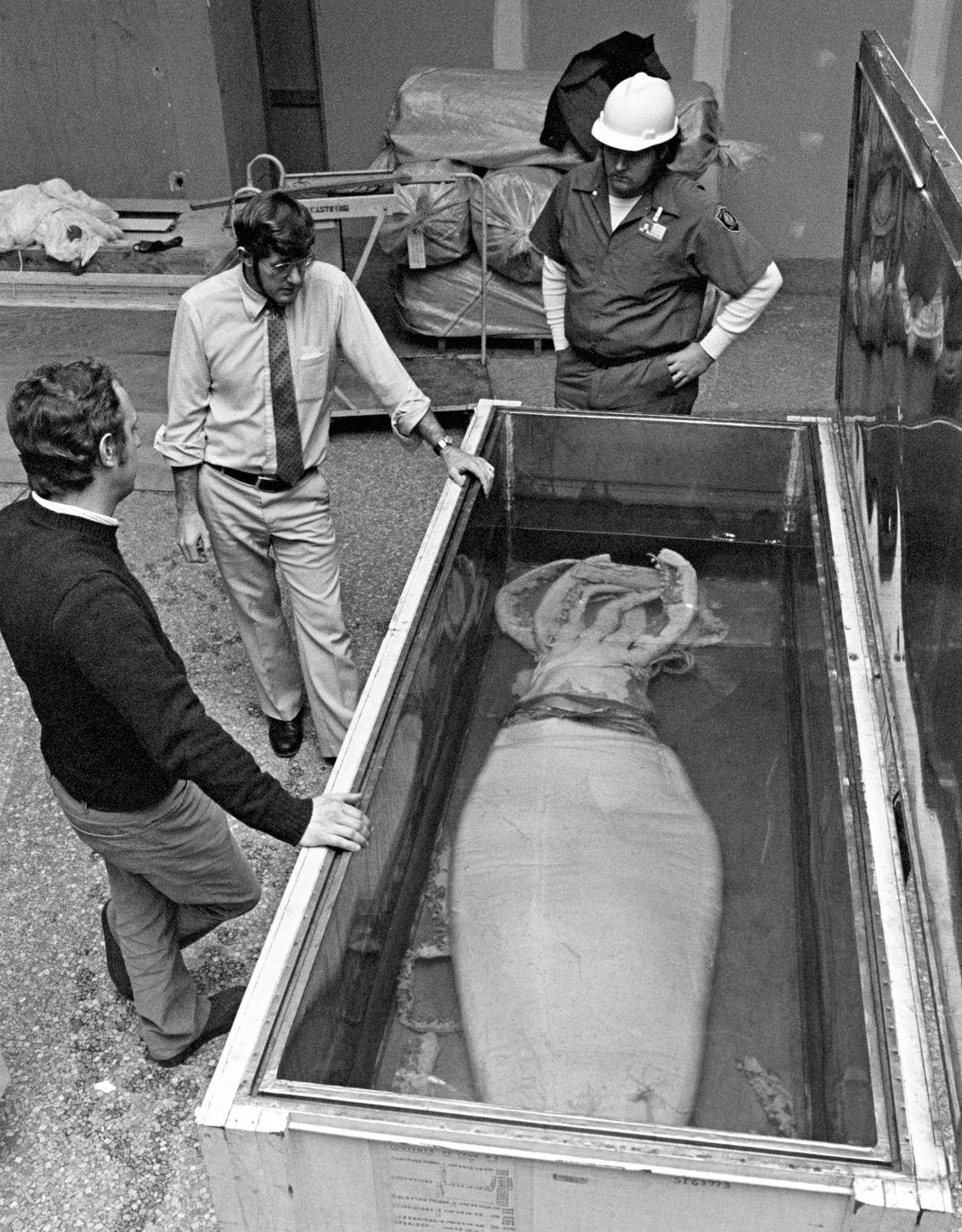 Operation Calamari: How the Smithsonian Got Its Giant Squids