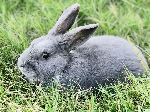 Thumper thumbnail