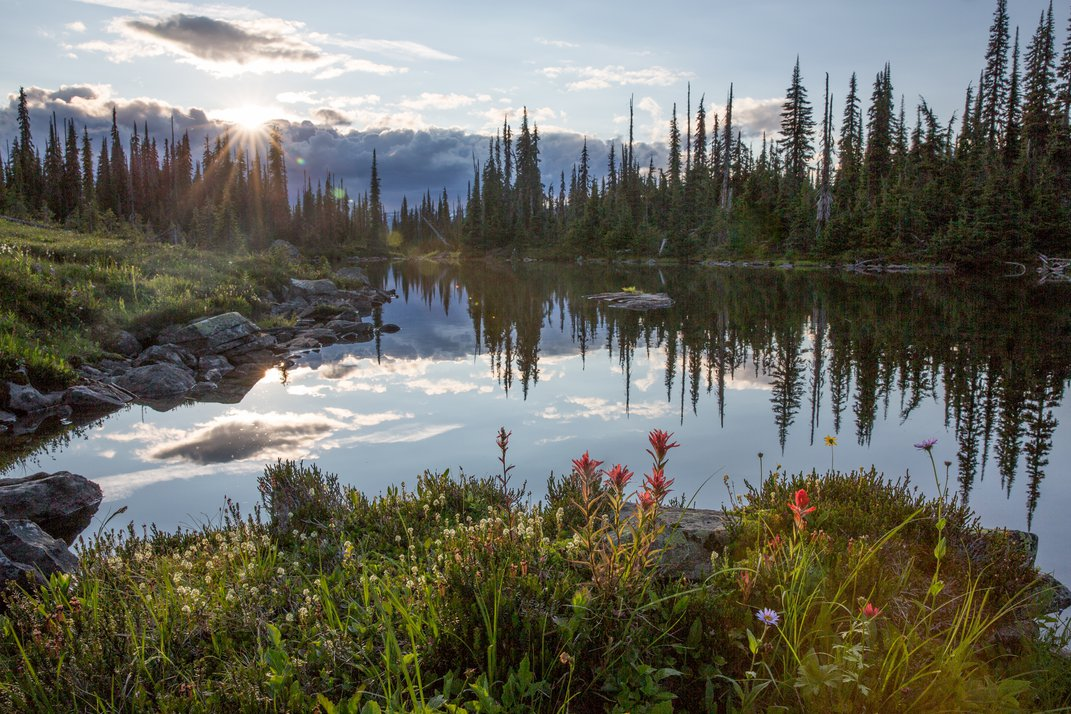 A Photographer's Quest to Document the Last of the Rainforest Caribou