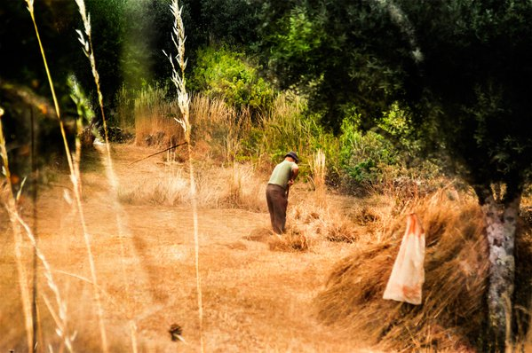 Working the Land thumbnail