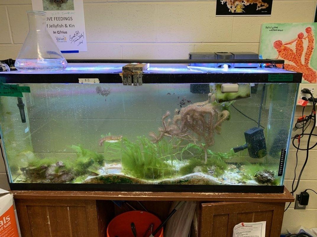 55-gallon aquarium tank in a research room