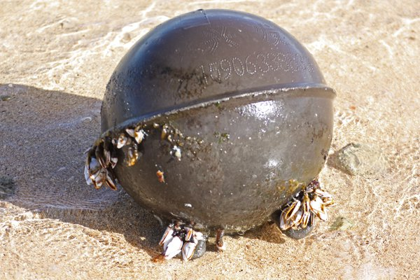 An oyster buoy, washed up on the shore of Kauai, a remnant of the 2011 Japan tsunami. thumbnail