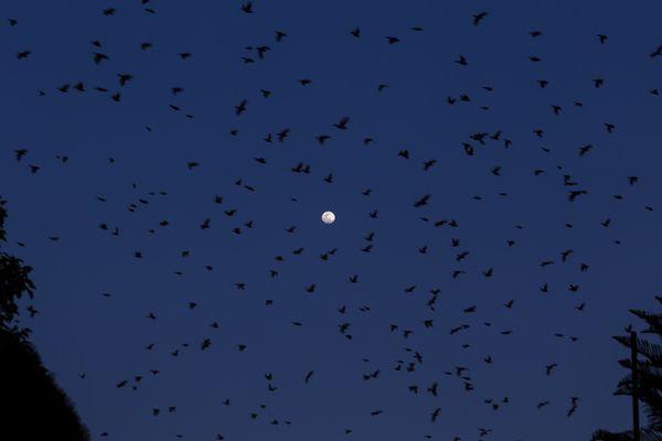 Birds And Moon thumbnail