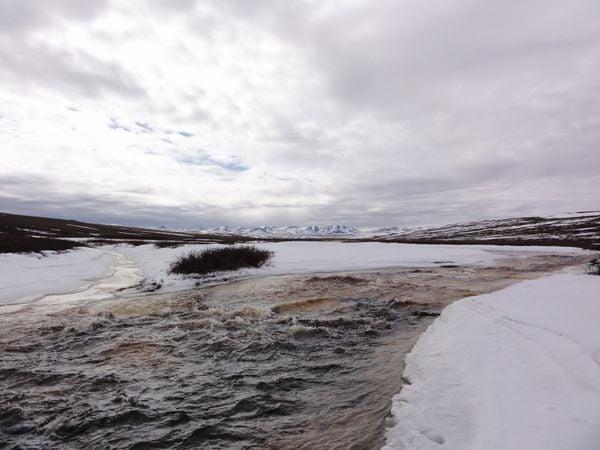Arctic Spring thumbnail
