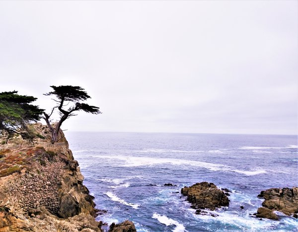 The lonely Cypress thumbnail