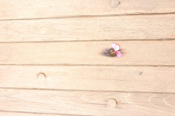 A fallen flower on the deck of the Battleship Missouri. thumbnail