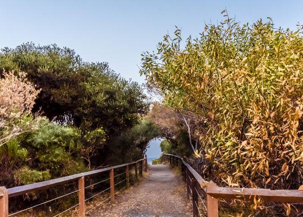 Path to the Ocean thumbnail