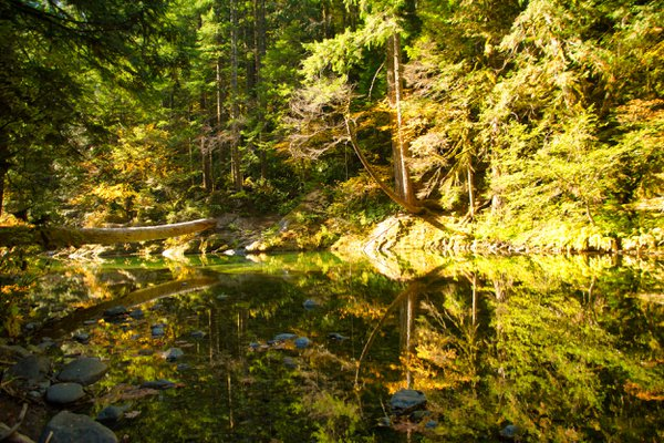 Reflections in the quiet waters of the Santiam River. thumbnail