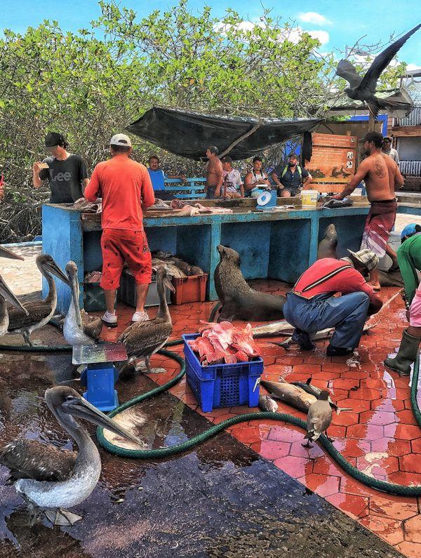Discerning Customers At The Fish Market thumbnail