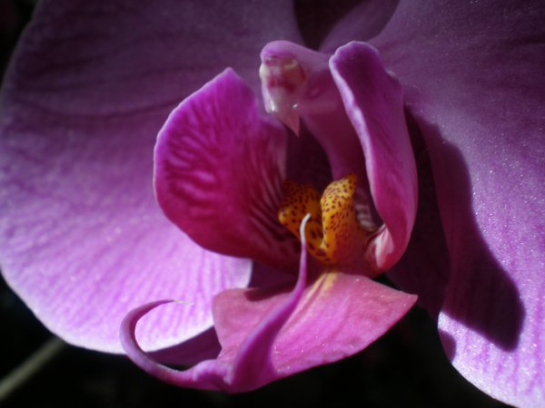 an Orchid at a nursery thumbnail