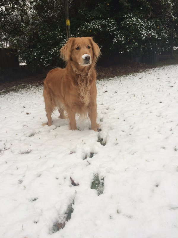 First snow thumbnail