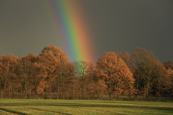 Rays of the rainbow thumbnail