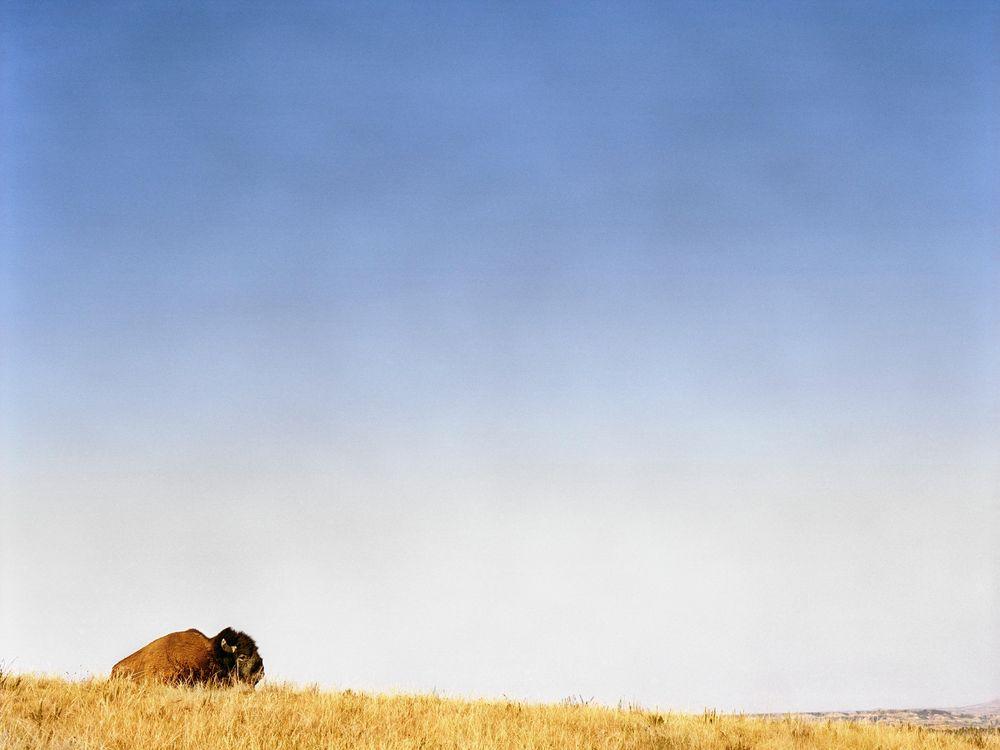 10_06_2014_bison.jpg