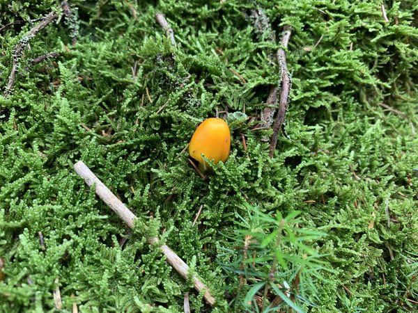 Orange Button in the Wild thumbnail