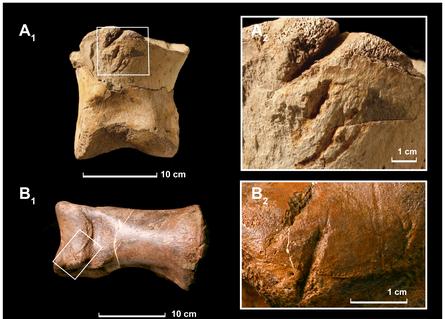 20110520083244tyrannosaurus-damaged-bones.jpg