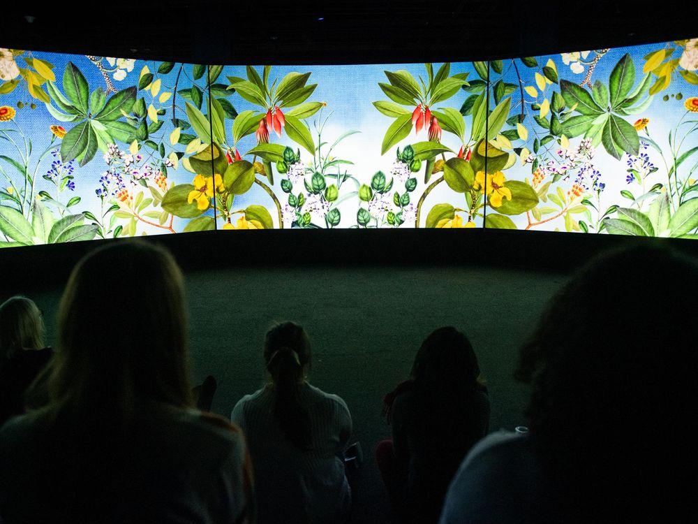 Visitors watching film