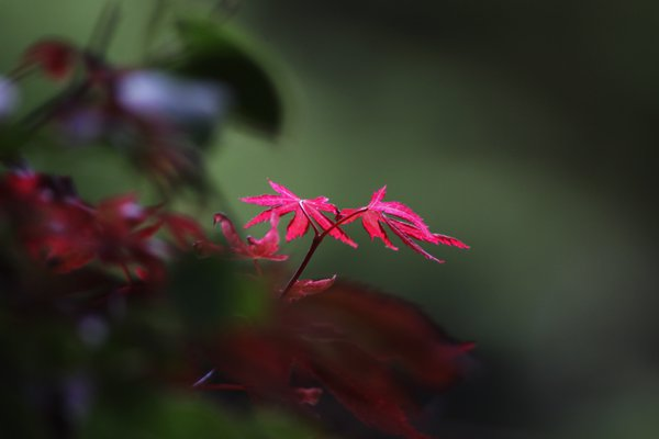 growing leaves illuminated by sunlight thumbnail