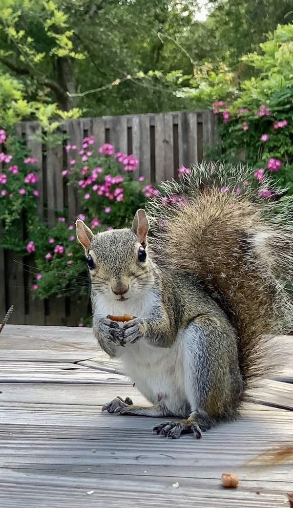 Jed the squirrel thumbnail