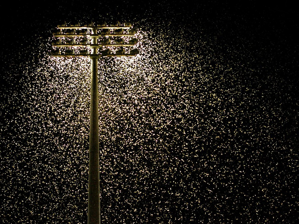 A floodlight shines while thousands of moths surround it in the dark of night. This image was taken at Energy Australia Stadium in Newcastle, Australia in 2005.
