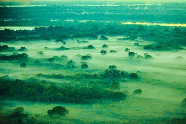 Pulmão do Mundo - Amazônia thumbnail