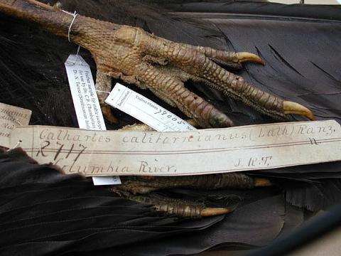 A label with handwriting next to a bird's claw.