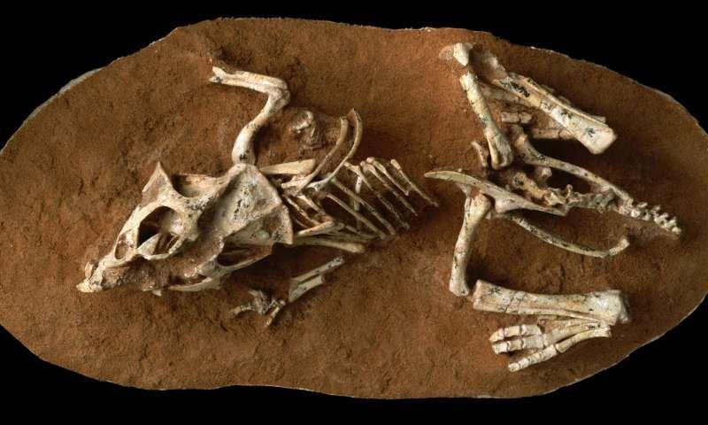 Dino Embryo