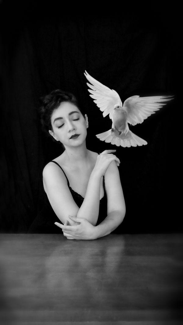 Paloma & the Birds I thumbnail
