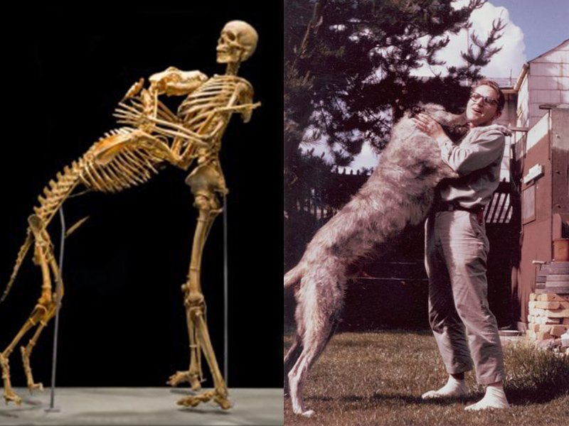 Grover Krantz Donated His Body to Science, On One Condition...