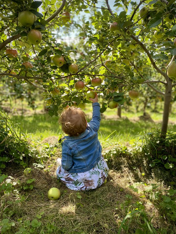 Childhood Apple Picking in Vermont thumbnail