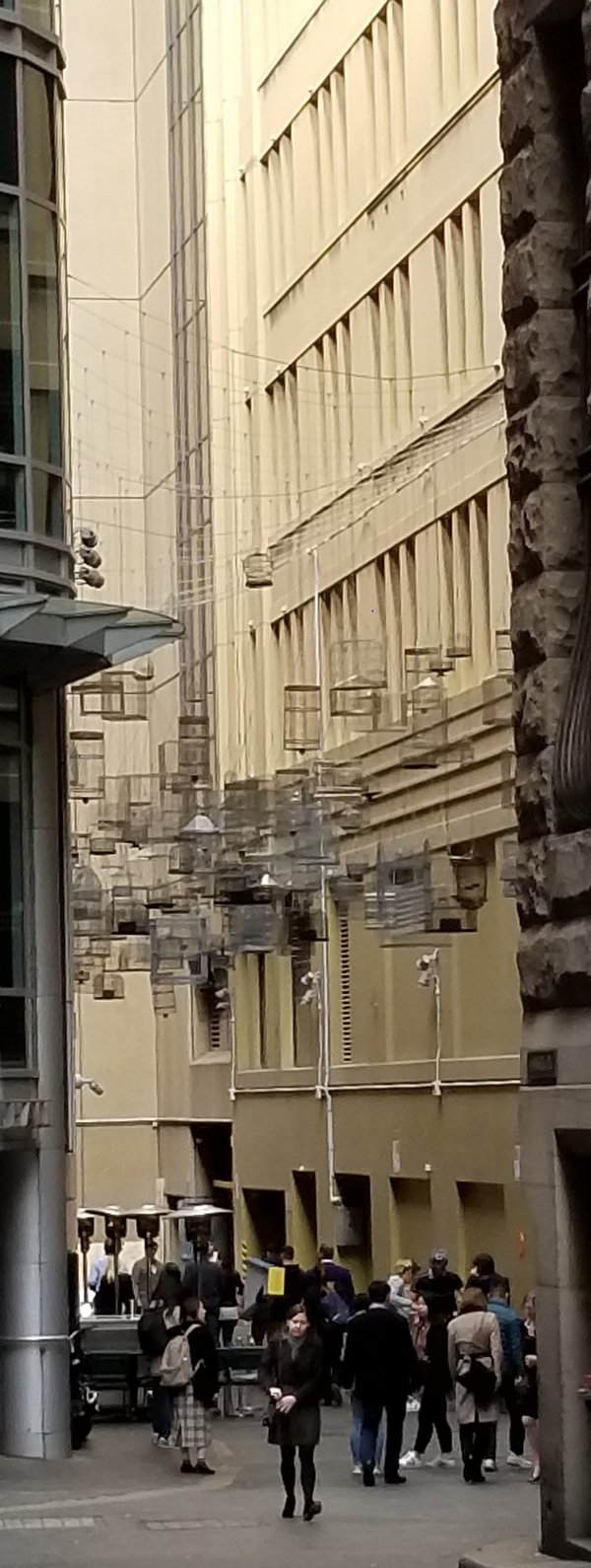 A Sydney, Australia city street with bird cages strung overhead thumbnail