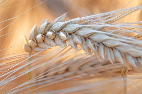 Dry Grass thumbnail