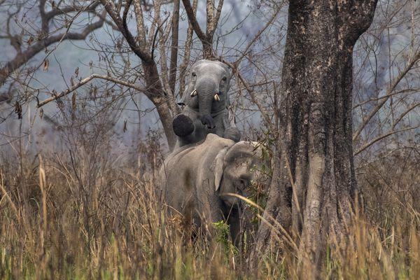 ELEPHANT INTERACTION thumbnail